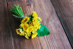 Dente-de-leão amarelo no fundo de madeira Foto de Stock Royalty Free