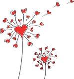 Dente-de-leão com corações em um fundo branco. Imagem de Stock Royalty Free