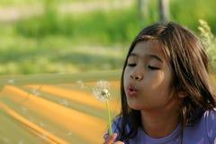 Dente-de-leão de sopro da criança Imagem de Stock