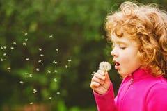 Dente-de-leão de sopro da menina encaracolado pequena bonita imagens de stock