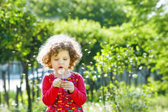 Dente-de-leão de sopro da menina encaracolado pequena bonita, tiro vertical imagens de stock