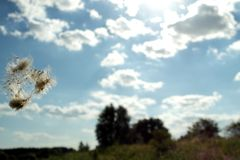 Dente-de-leão do voo no céu azul fotografia de stock royalty free