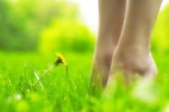 Dente-de-leão e pés (efeito da luz macia) Foto de Stock Royalty Free