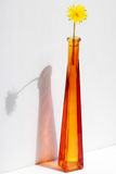 Dente-de-leão em um vaso de vidro Flor selvagem no vaso Imagens de Stock Royalty Free