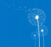 Dente-de-leão no azul Imagens de Stock