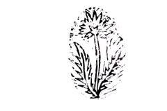 Dente-de-leão no fundo branco ilustração do vetor