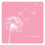 Dente-de-leão no fundo cor-de-rosa Fotos de Stock Royalty Free