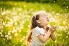 Dente-de-leão de sopro da menina pequena fotografia de stock royalty free
