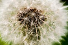 dente-de-le?o, taraxacum, dente-de-le?o das sementes, espalhando as sementes pelo vento, vento, sopro do vento, fotos de stock