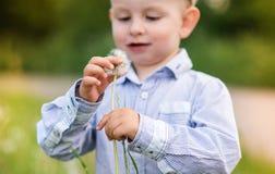 Dente-de-leão de sopro do rapaz pequeno Verão ensolarado Imagens de Stock Royalty Free
