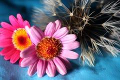 Dente di leone e fiori Immagine Stock
