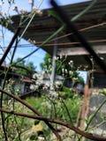 Dente di leone, recinto arrugginito, sole di pomeriggio, cortile immagini stock