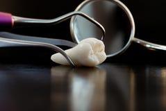 Dente e ferramentas para o tratamento Foto de Stock Royalty Free