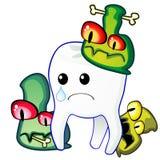 Dente e germes Fotografia de Stock