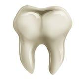 Dente molare Fotografie Stock Libere da Diritti
