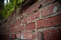 Dented wall of red brick. Overgrown ruin. Close up view. Selective focus Royalty Free Stock Image
