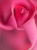 Dentelez l'instruction-macro rose ENV 10 illustration stock
