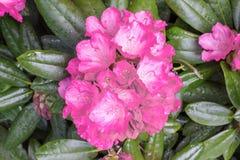 Dentelez la fleur avec les lames vertes Image libre de droits