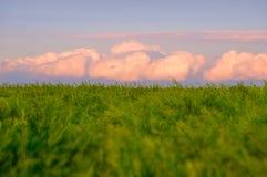 Dentelez le cumulus Photos libres de droits