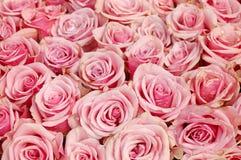 Dentelez le fond de roses Image libre de droits