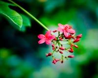 Dentelez les fleurs Image libre de droits