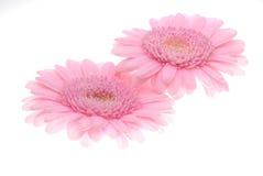 Dentelez les fleurs image stock