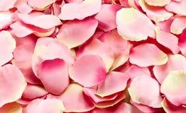Dentelez les pétales roses Image libre de droits