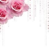 Dentelez les roses photos stock