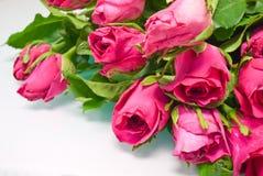 Dentelez les roses d'isolement sur le blanc Photographie stock libre de droits