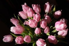 Dentelez les tulipes Images libres de droits