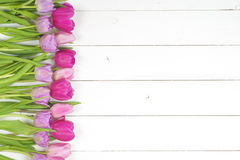Dentelez les tulipes Image stock