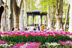 Dentelez les tulipes Photographie stock
