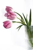 Dentelez les tulipes dans un vase image libre de droits