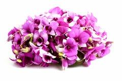 Dentella l'orchidea Fotografia Stock