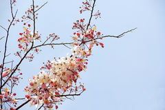 Dentellare-inondi i fiori Fotografie Stock Libere da Diritti