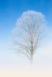 Dentelle blanche naturelle de gelée sur les branches d'arbre givrées Image stock