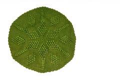Dentelle tricotée par vert de vintage image libre de droits