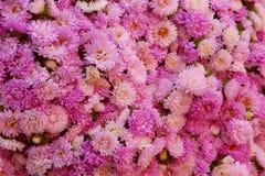 Dentelli i fiori Immagini Stock