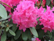 Dentelli l'albero del fiore Fotografia Stock Libera da Diritti