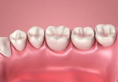 dentes 3D ou ascendente próximo do dente Fotografia de Stock