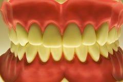 Dentes Foto de Stock