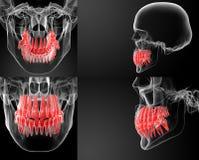 dentes imagem de stock
