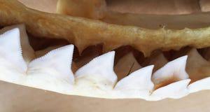dentes Fotografia de Stock Royalty Free