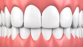 dentes da ilustração 3D e modelo da goma ilustração do vetor