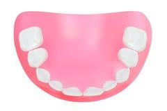 Dentes da maxila mais baixa. Fotografia de Stock