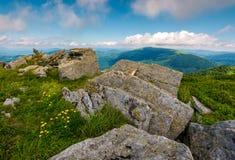 Dentes-de-leão amarelos nas montanhas fotografia de stock royalty free