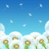 Dentes-de-leão em um fundo do céu azul Imagens de Stock