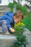 Dentes-de-leão sniffing do bebé no parque da mola Fotografia de Stock Royalty Free