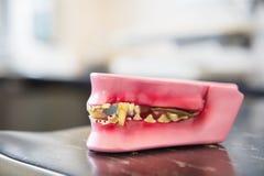 Dentes de um cão Fotografia de Stock Royalty Free