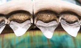Dentes do tubarão foto de stock royalty free